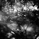 2013 - summer haze by Ursa Vogel