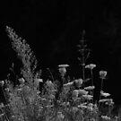 2013 - flora by Ursa Vogel
