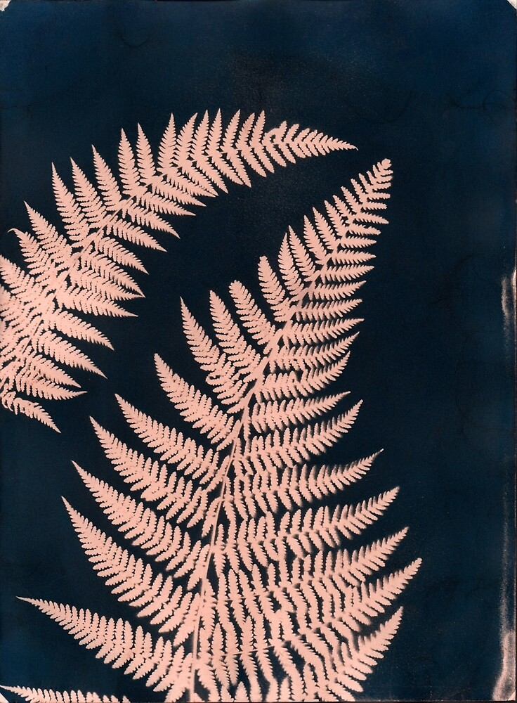Brown Ferns by Kay-Tomlinson