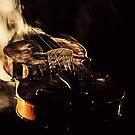 Violin Annie by Darren Bailey LRPS
