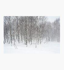 winter snowstorm Photographic Print