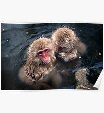 Snow Monkeys Poster