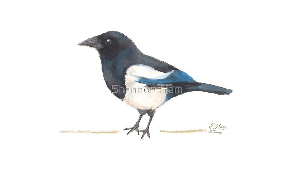 A Lovely Little Magpie by Shannon Ham
