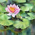 Waterlily by Ann Mortimer