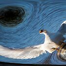White Wings by George Lenz