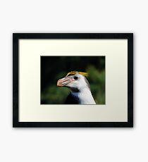 Proud Royal Penguin Framed Print
