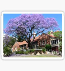 Jacaranda tree, Australia Sticker