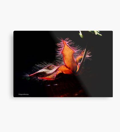 STAPELIA GIGANTEA - Giant carrion flower - REUSE AASBLOM Metal Print