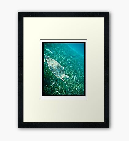 Swim with me... Framed Print