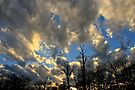 Evening Clouds  by NatureGreeting Cards ©ccwri