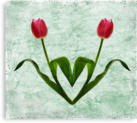 Tulip Heart by Patricia Jacobs DPAGB LRPS BPE4