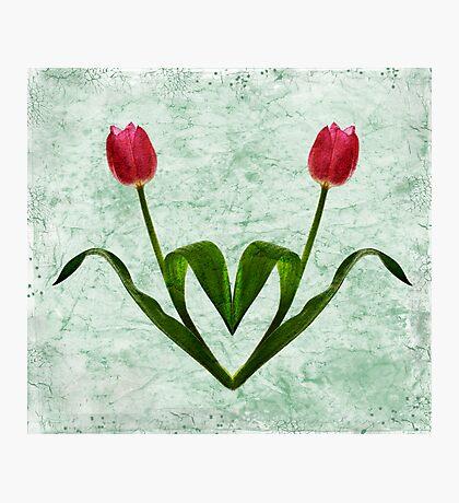 Tulip Heart Photographic Print