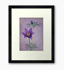 Easter Flower Framed Print