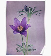 Easter Flower Poster