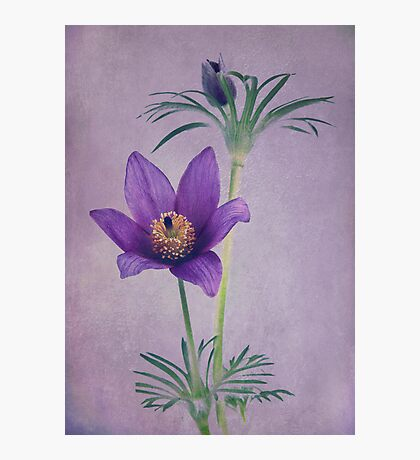 Easter Flower Photographic Print