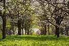 Blossom in the Pinnacles by Nigel Bangert