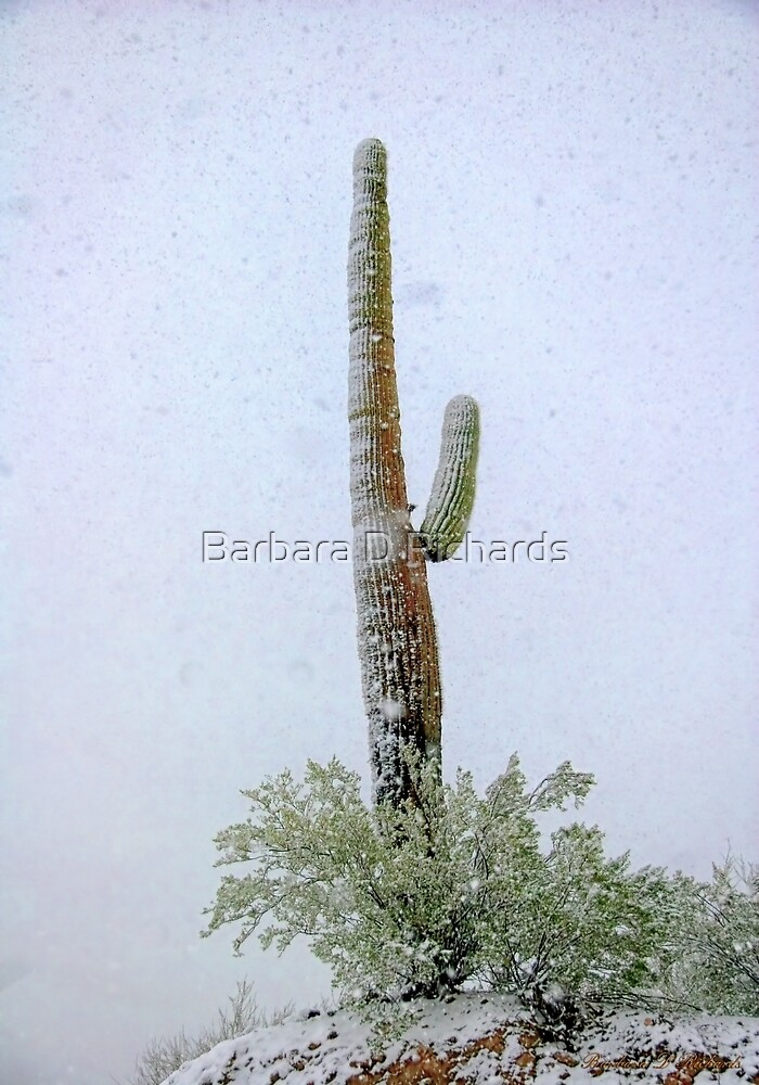 Arizona Snow Storm by Barbara D Richards