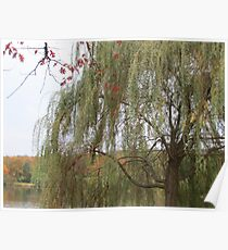 Under The Willow Poster