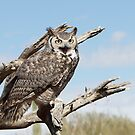 Great Horned Owl by tomryan