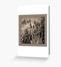 old timey tulips (square) Greeting Card