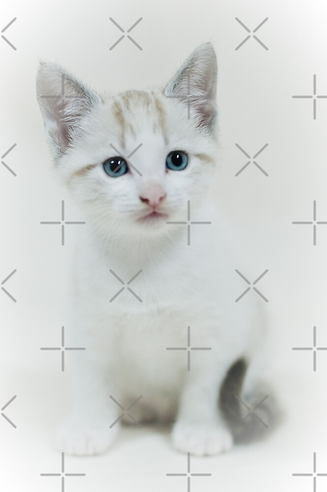 Cat by homydesign