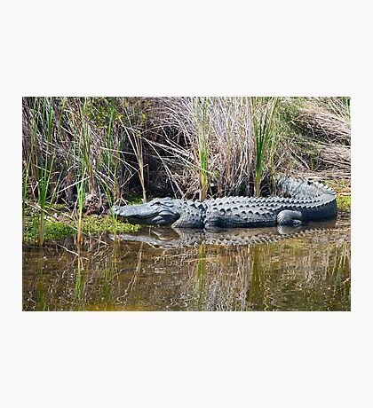 King of the Pond  Photographic Print