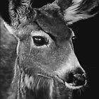 Doe, A Deer by Heather Ward