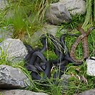 Tiger Snakes by pennyswork