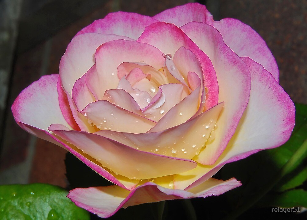 Mother's Rose by relayer51