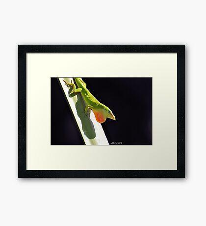 Green Anole Framed Print