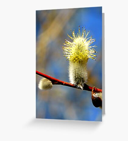 Pussy Willow Detail Greeting Card