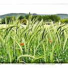 France - a wheat field near Gourdon by Marlene Hielema