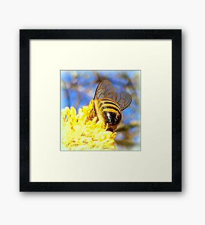 Pure Rich Honey Framed Print