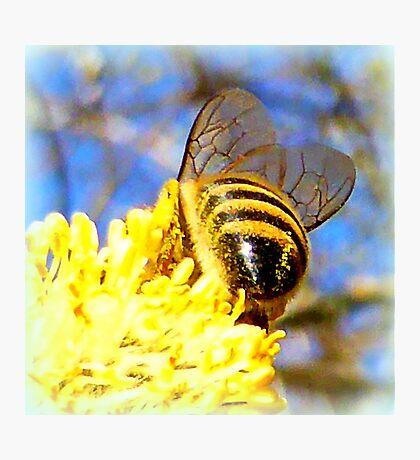 Pure Rich Honey Photographic Print
