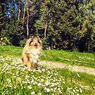 Best Daisy by BellatrixBlack