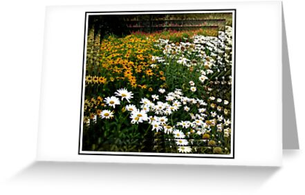 A Thousand Eyes Vignette in Reflection Frame by BlueMoonRose