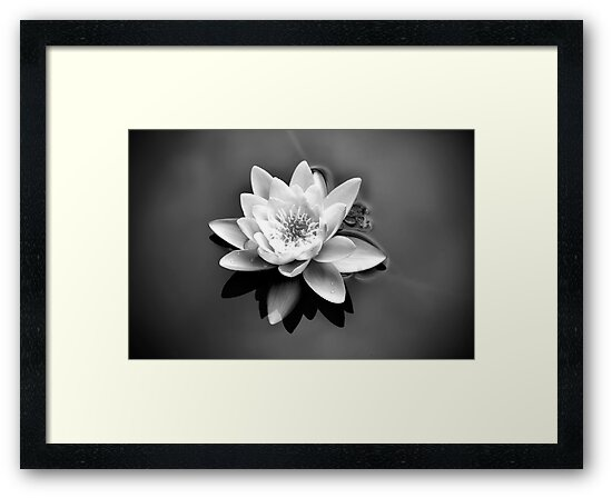 Waterlily by Tracie Louise