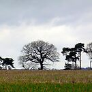Line of Trees by mikebov