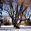 Winter Trees by Shulie1