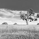 Tree by Gavin Kerslake
