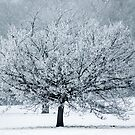 Last Winter by John Dunbar