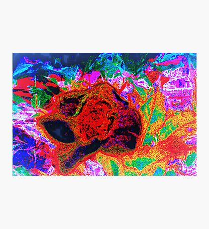 A tropical night Photographic Print