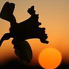 Sunset Daffodil by Martin Griffett