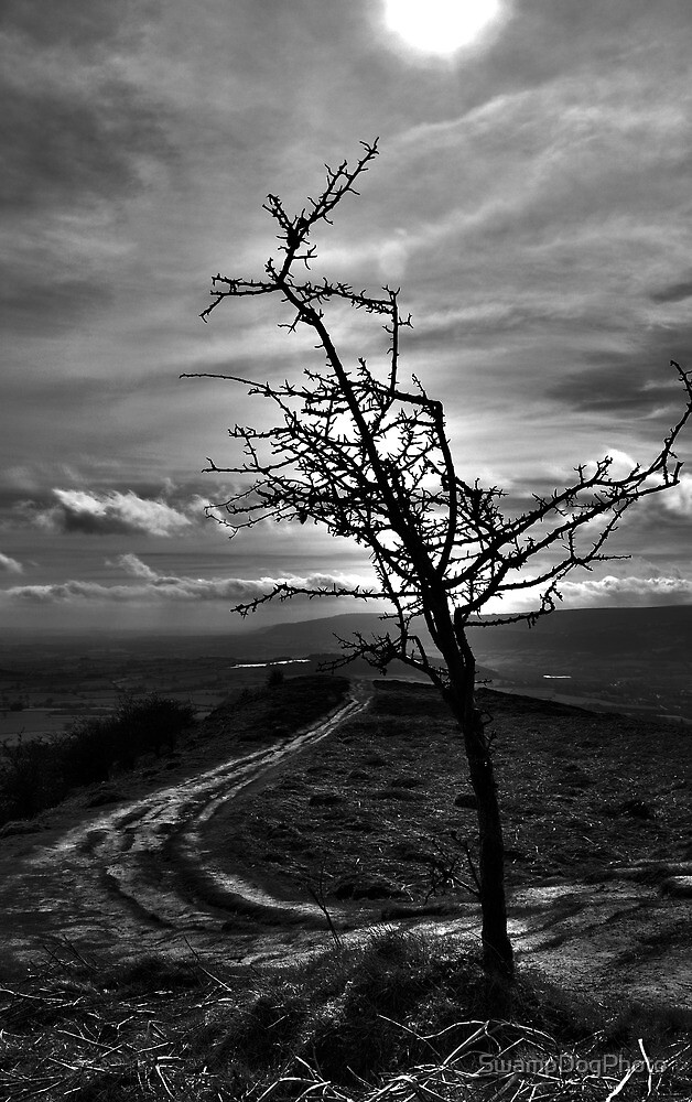 On The Skirrid by SwampDogPhoto