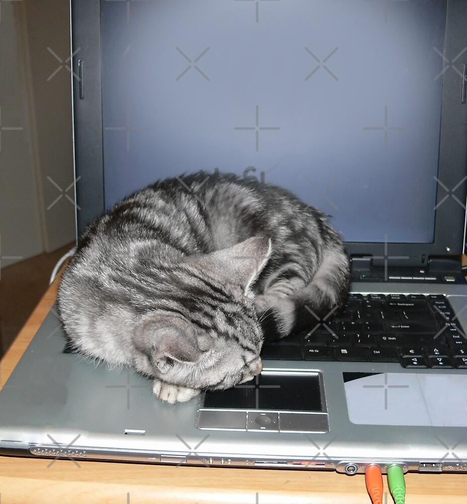 Kitten finds a warm spot by Sandra Chung