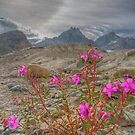 SunDog and the Fireweed by James Anderson