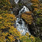 Fagus Falls by Robert Mullner