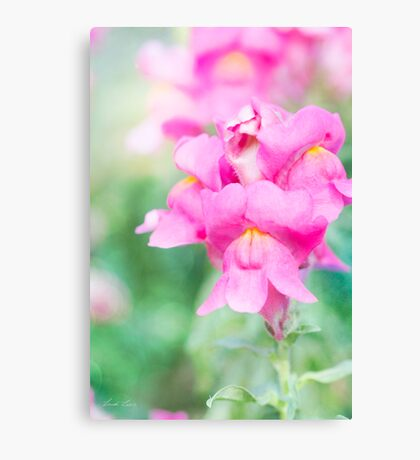 Pretty Pink Snapdragons Canvas Print