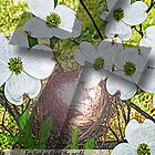 John 3:16 featuring Dogwood Flower and Cross by Terri Chandler