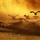 20.3.2014: Swans at River I by Petri Volanen